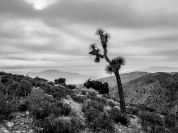 Joshua tree National park, Californie 3